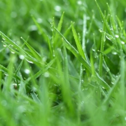 Pļavas vannas sāls