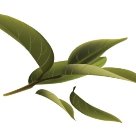 Tējas koka pīlings