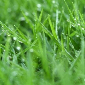 Pļavas losjons